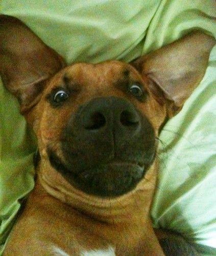 guide dogs australia pet insurance qld