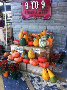 butternut pumpkin growing guide when using a trellis