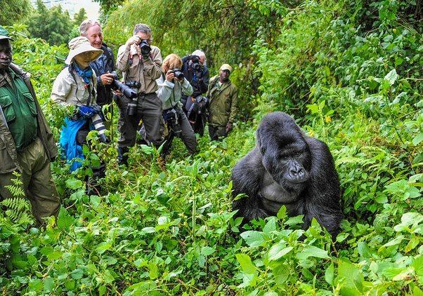 tour guide for dangerous jungle trek