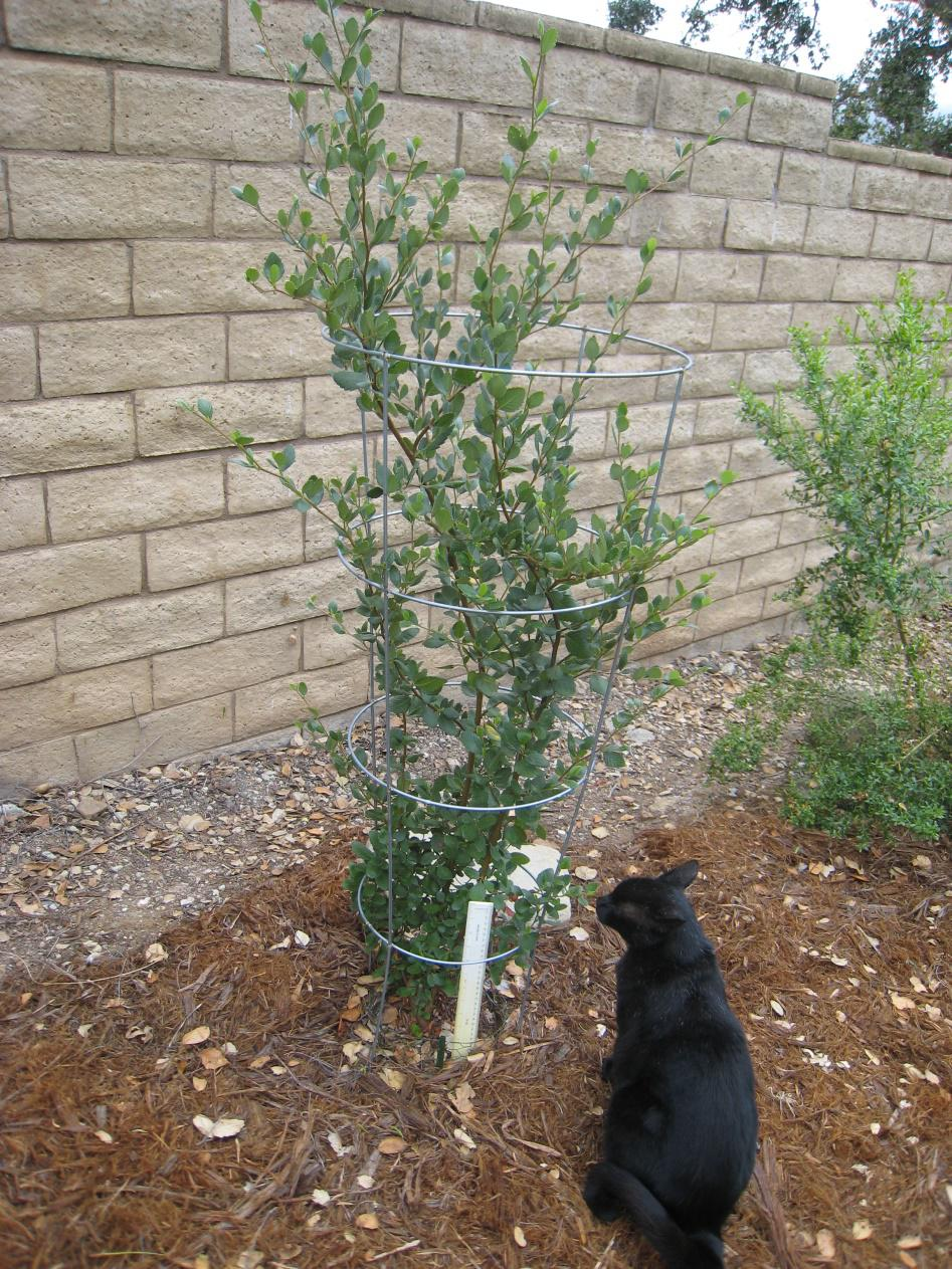 vegetable planting guide sacramento ca