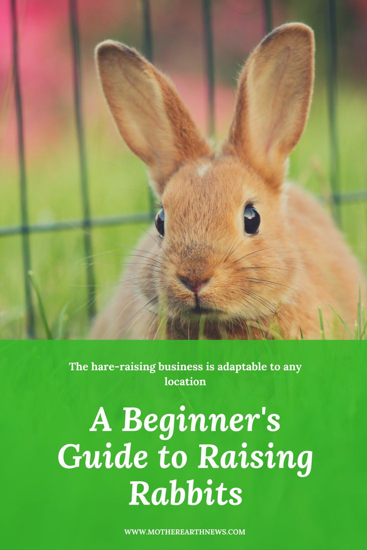 free beginners guide to fba delling