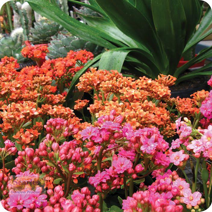 gardening australia planting guide app