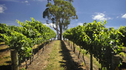 adelaide hills good food guide