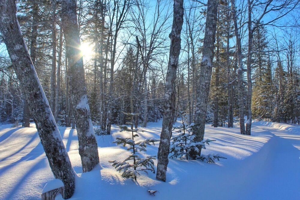 2016 travel guide new brunswick canada