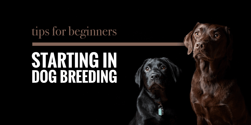 beginners guide to getting a puppy
