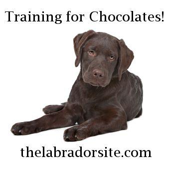 guide dog training schools near me